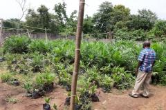 Oil-Palm-Nursery-3