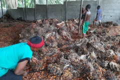 Workers-Removing-fruits-from-Bunches